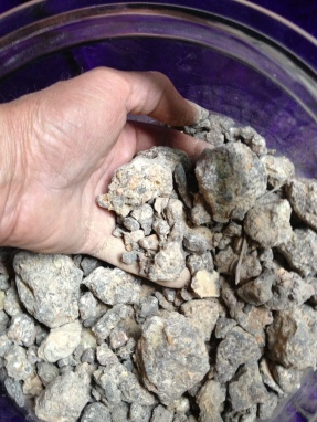Frankincense. Boswellia Rivae Ethiopia