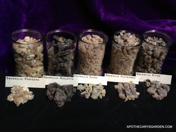 A visual comparison of 5 types of Frankincense-Boswellia- Papyrifera, Neglecta, Frereana, Rivae, Carterii/Sacra Apothecarysgarden.com