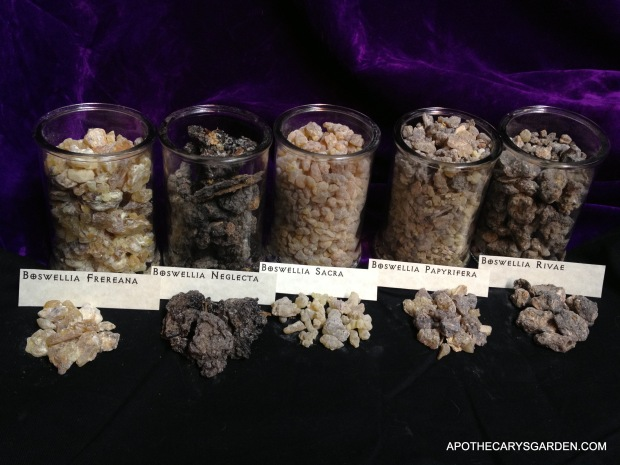 A Visual comparison of Boswellia Species-Frankincense