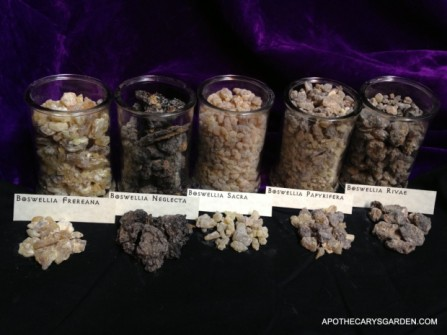 A visual comparison of three types of Frankincense