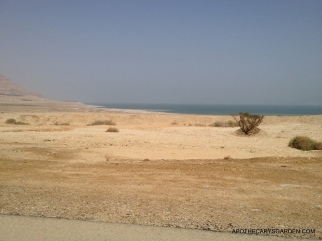 Between Neot Hakikar and Ein Gedi along the shore of the Dead Sea